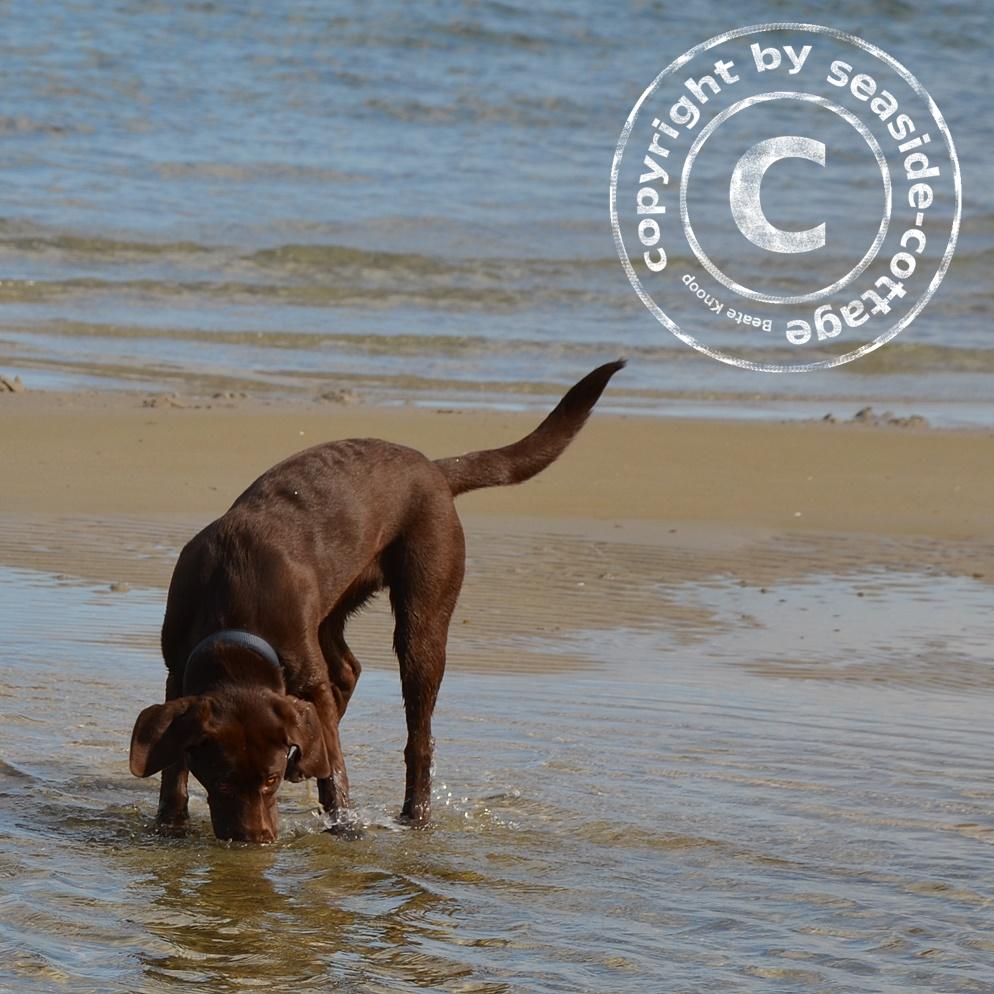 Hundestrand Test