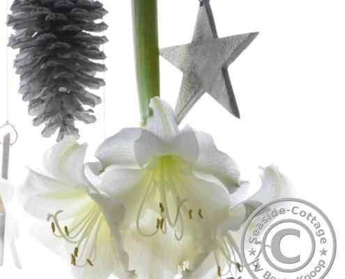 Hängende Amaryllis Raumdeko zu Weihnachten