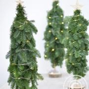 Tannenbaum selbermachen