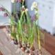 Natürliche Blumendeko Frühling