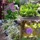 Gärtnern in Töpfen und Zinkwannen,urban gardening