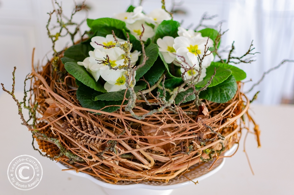 Weiße Primeln in einem Nest aus Hopfenrebe