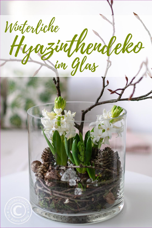 Hyazinthen im Glas winterlich dekoriert mit Zapfen, Zweigen und Glasbrocken