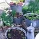 Topfgarten, Gemüse in Zinkwannen