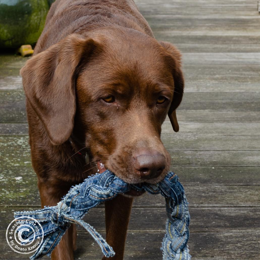 DIY Ideen aus alten Jeans Hundespielzeug