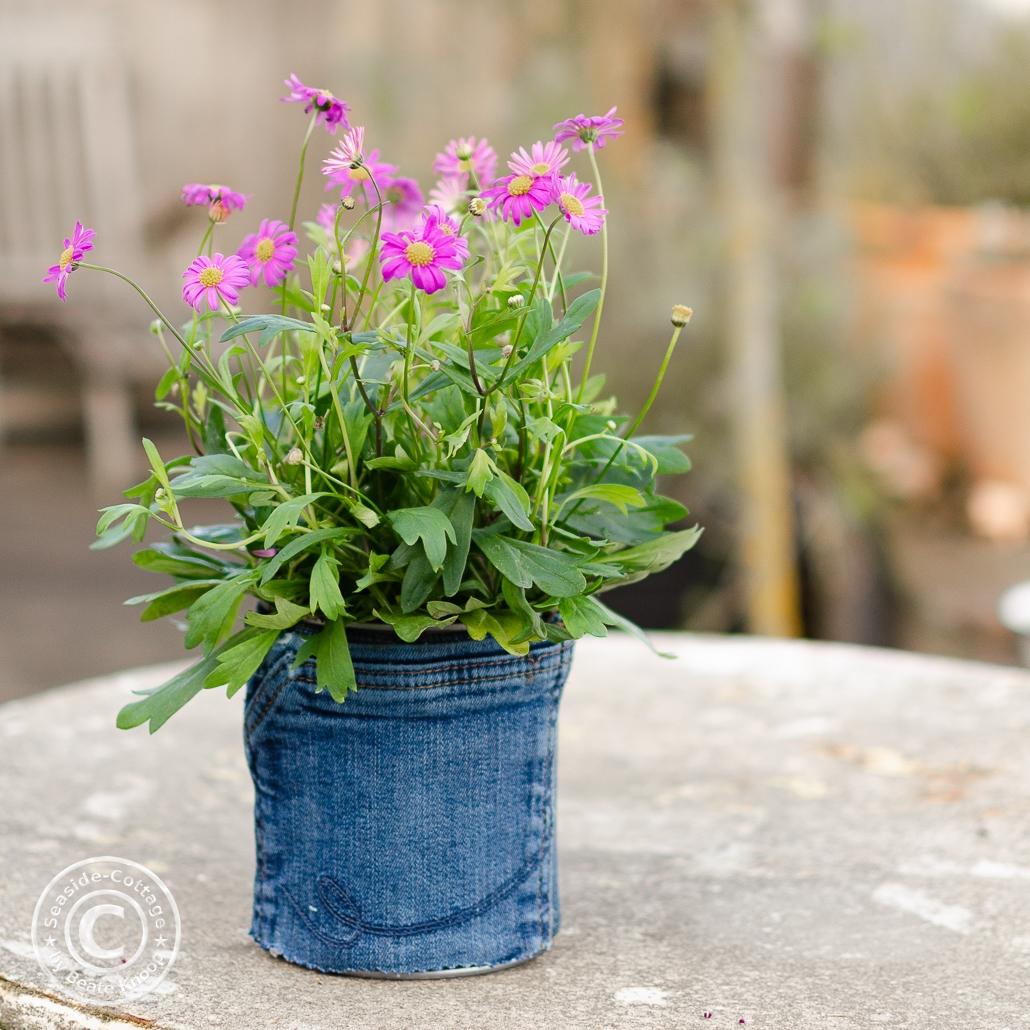 Konservendosen mit Jeansresten beklebt und als Blumentopf verwendet