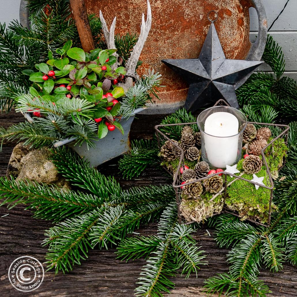 Gartendeko zu Weihnachten mit Rebhuhnbeere Gaultheria