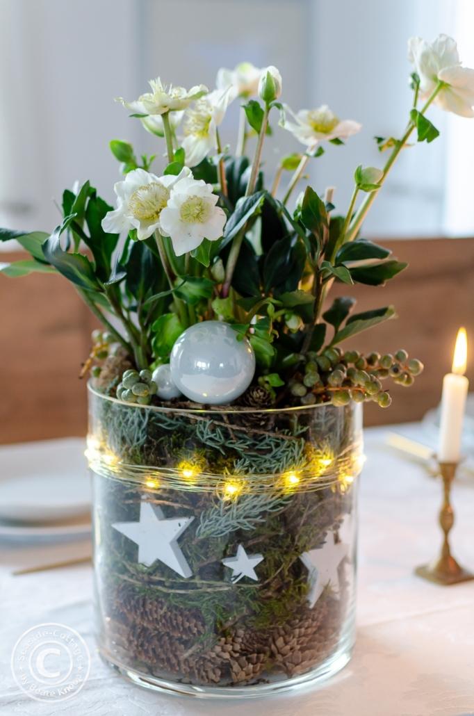 Christrosen weihnachtlich dekoriert im Glas für Tischdeko