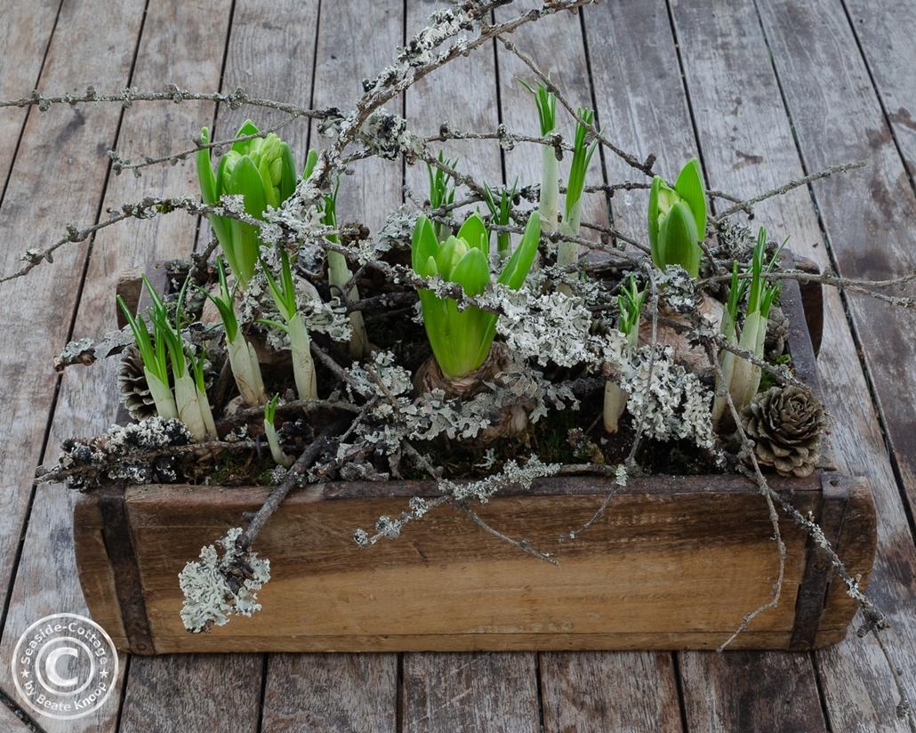 Anleitung Hyazinthen und Krokusse in Ziegelform aus Holz winterlich dekoriert