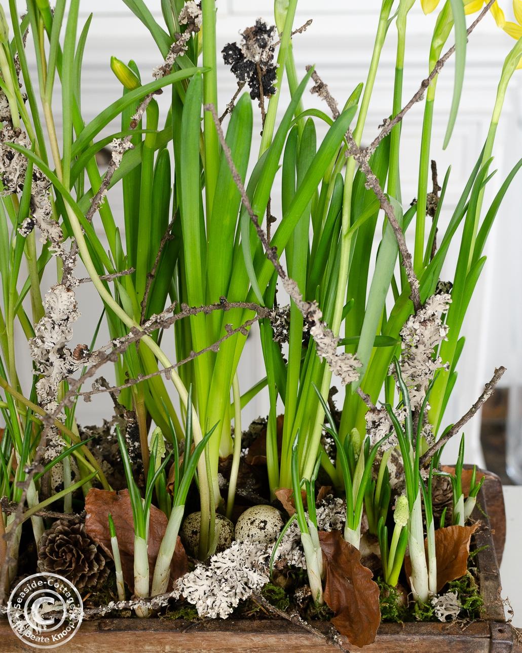 Naturnahe Bodengestaltung in einer Ziegelform aus Holz mit Frühlingsblumen