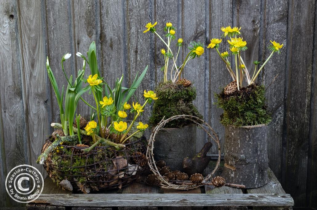 Gartendeko mit Winterlingen im Drahtkorb und in Moos gewickelt auf kleinen Baumstämmen.