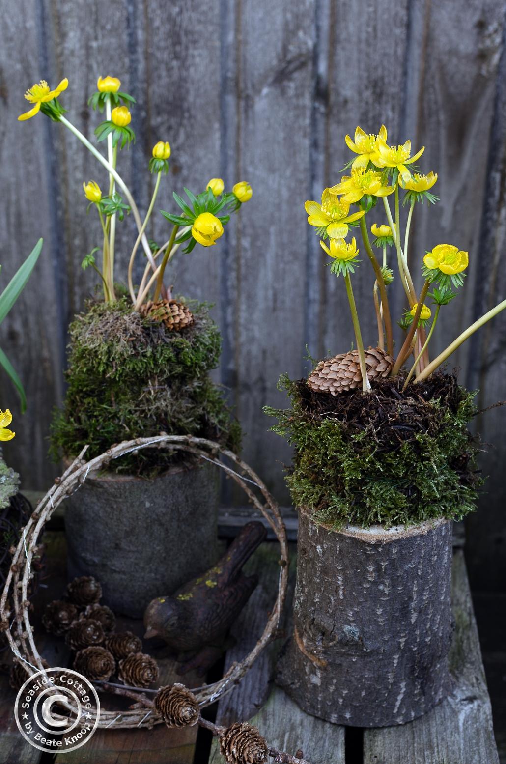 Naurnahe Gartendeko mit zwei in Moos gewickelete Winterling-Pflanzen auf kleinen Baumstämmen.
