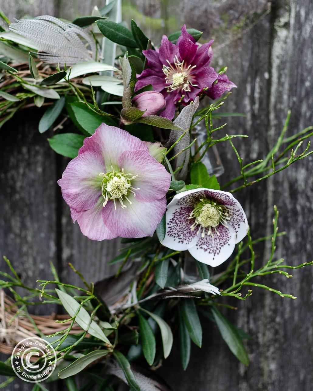 Lenzrosenblüten in rosa, dunkelpin und wei´ß mit Sprenkeln, dekoriert auf einem Rebkranz mit Olivenzweigen und Heidelbeergrün
