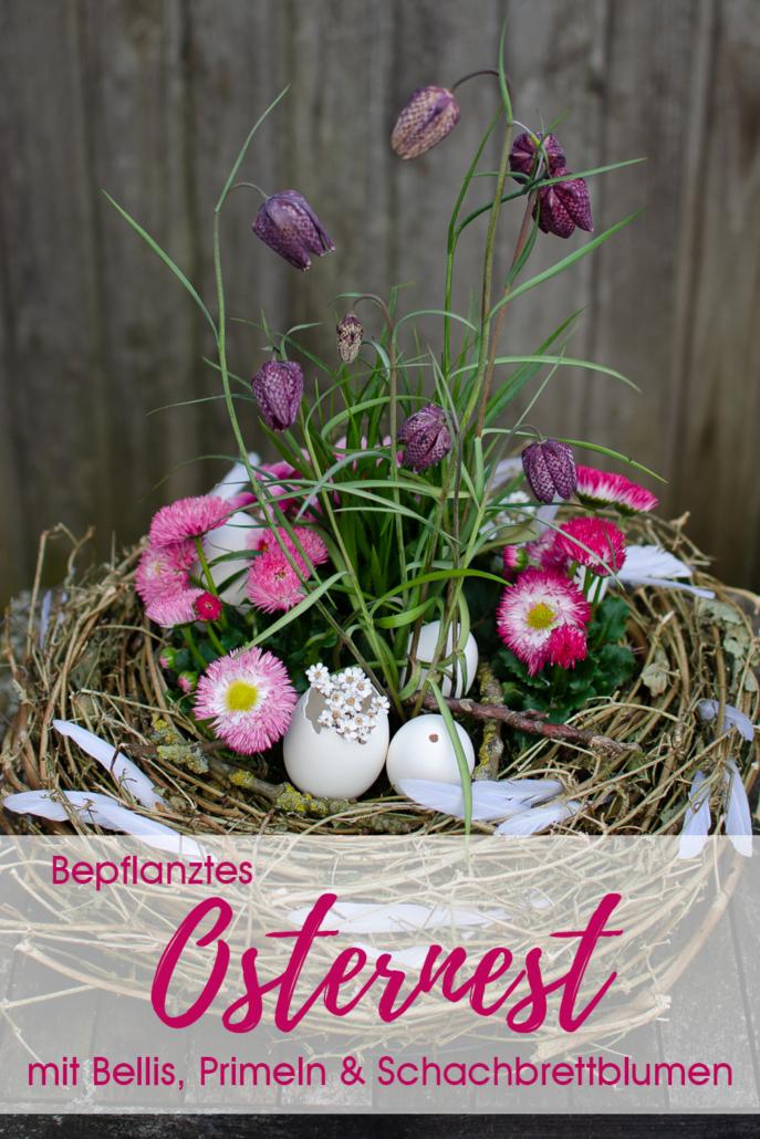 Osternest bepflanzt mit Bellis, Primeln und Schachbrettblumen