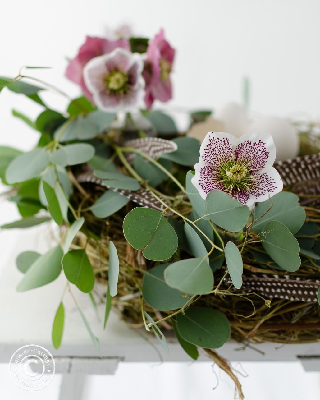 Lenzeosen und Eukalyptus