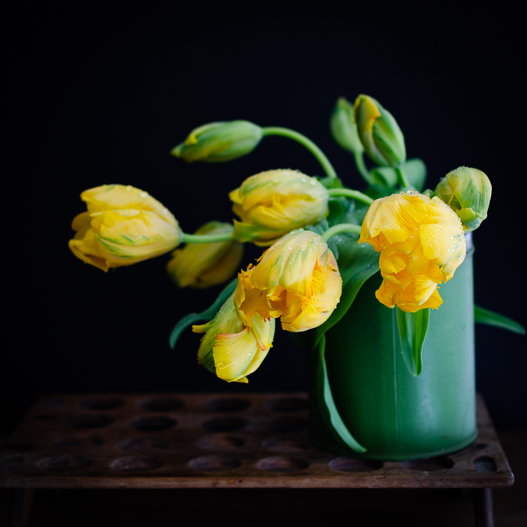 yellow tulips moody photography