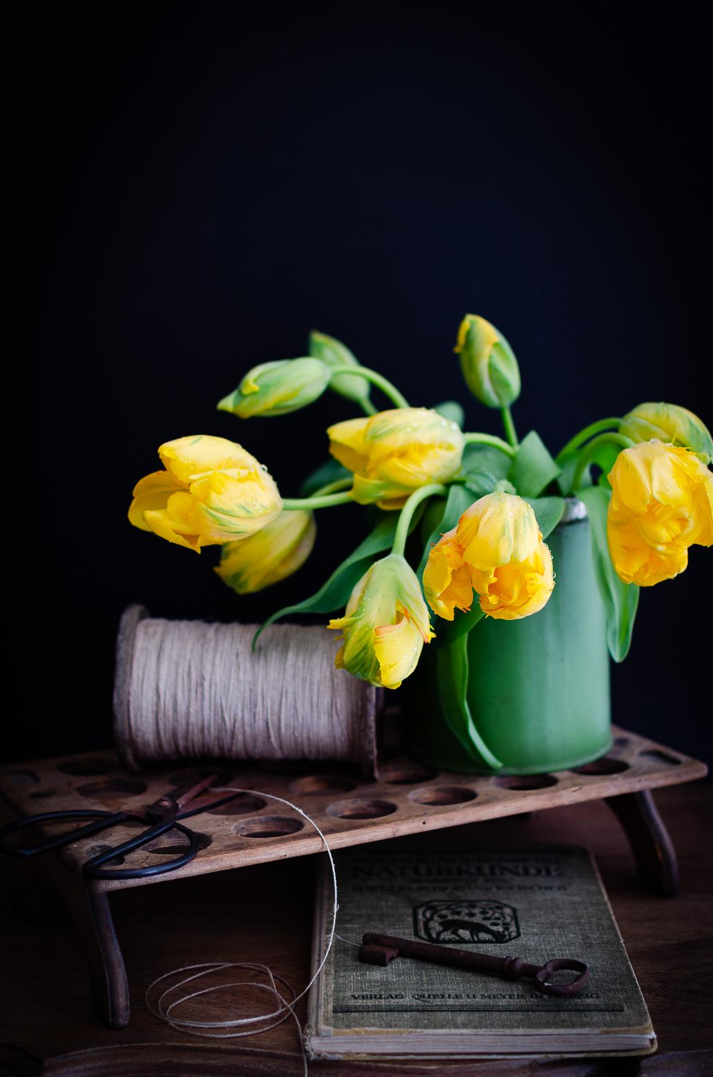 gelbe Tulpen vor schwarzem Hintergrund