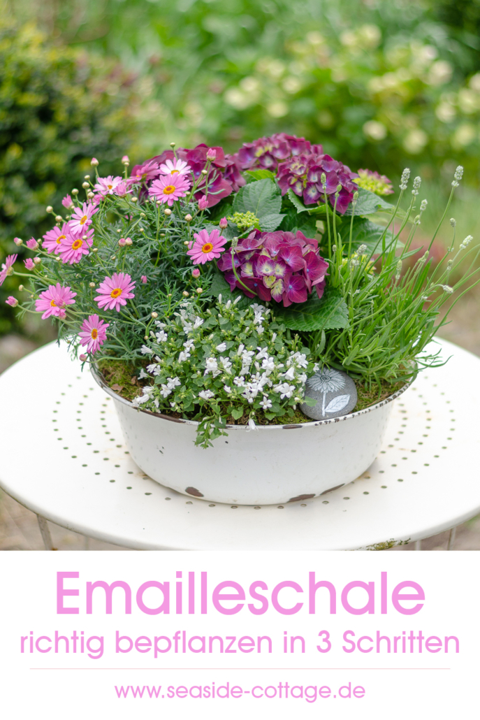 Pinterest Pin Emailleschale richtig bepflanzen in 3 Schritten