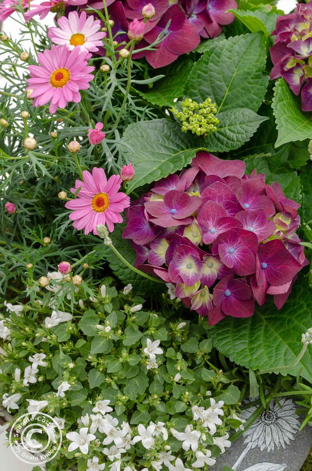 Sommerblumen Hortensie, Margerite, Glockenblumen, Lavendel