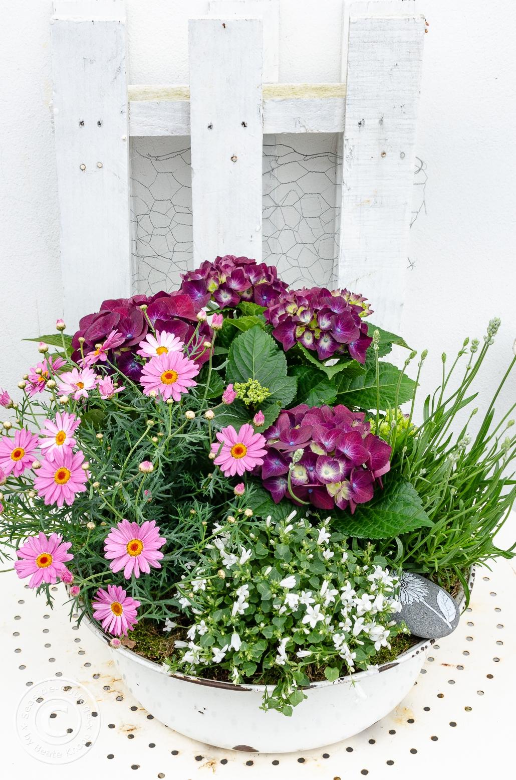 Blumen zum Muttertag - bepflanzte Emmaileschale in 3 Schritten
