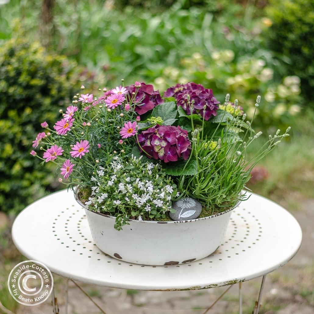 Mehrjährige Sommerblumen in Emailleschale auf Gartentisch