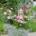 Bepflanzte Zinkwanne mit rosa Sommerblumen und mit einer rosa Laterne Marke Feuerhand Baby Special dekoriert