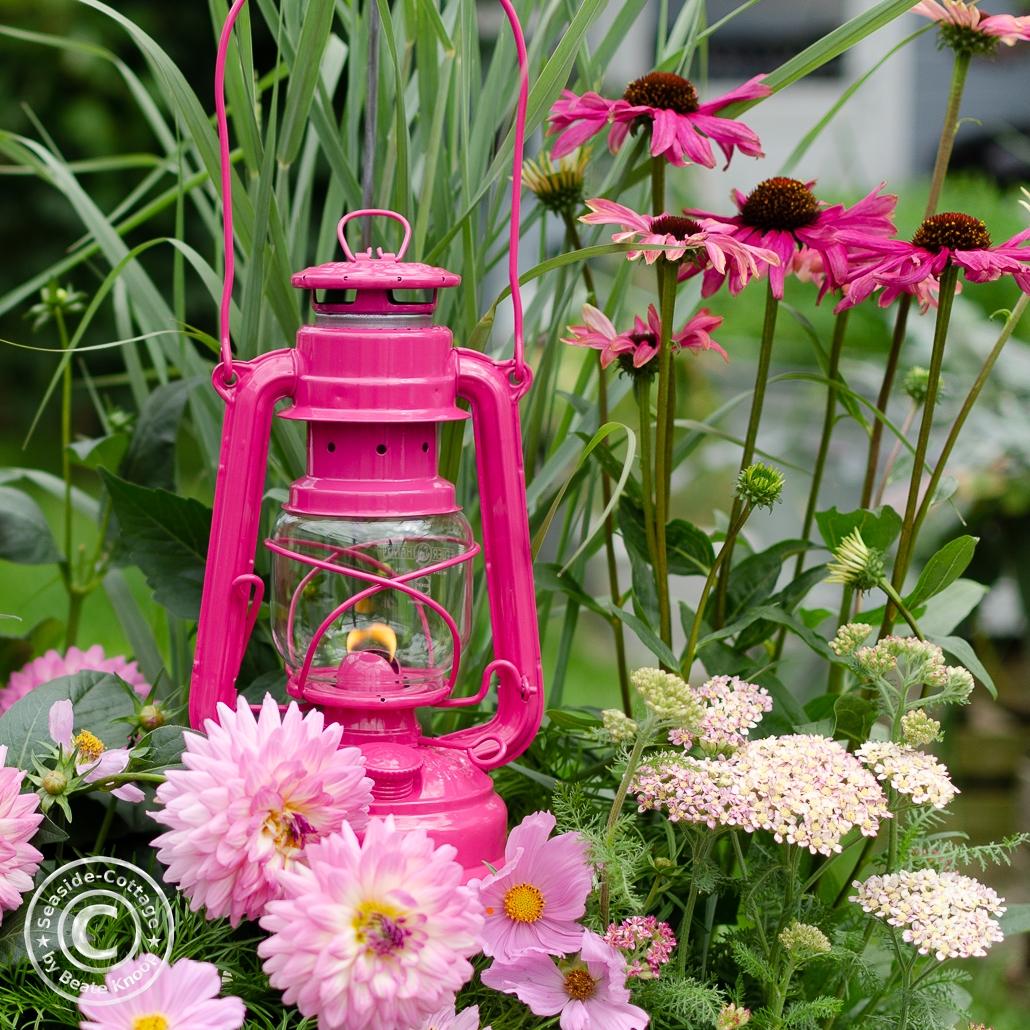 Pinkfarbene Laterne Marke Feuerhand Baby Special umrahmt von Gräsern, rosa Dahlien, rosa Schafgarbe und Purpursonnenhut