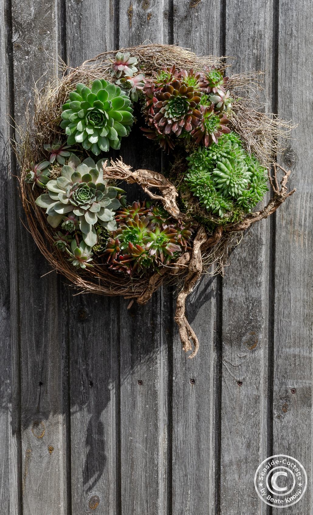 Naturkranz mit Sempervivum an einer Holzwand hängend