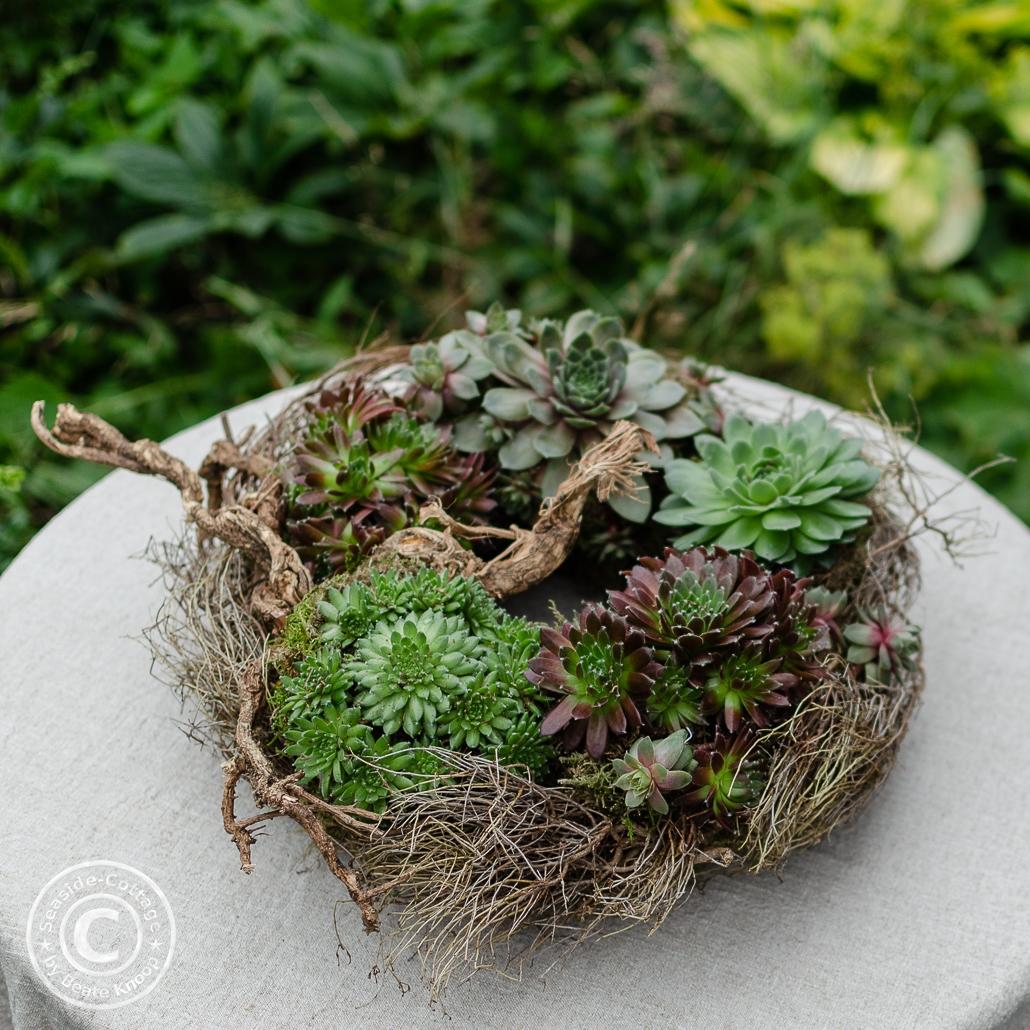Naturkranz mit Sempervivum (Hauswurz) und Euphorbia spinosa auf einem runden Gartentisch mit Naturleinentischdecke liegend. Unscharf im Hintergrund grüne Gartenpflanzen