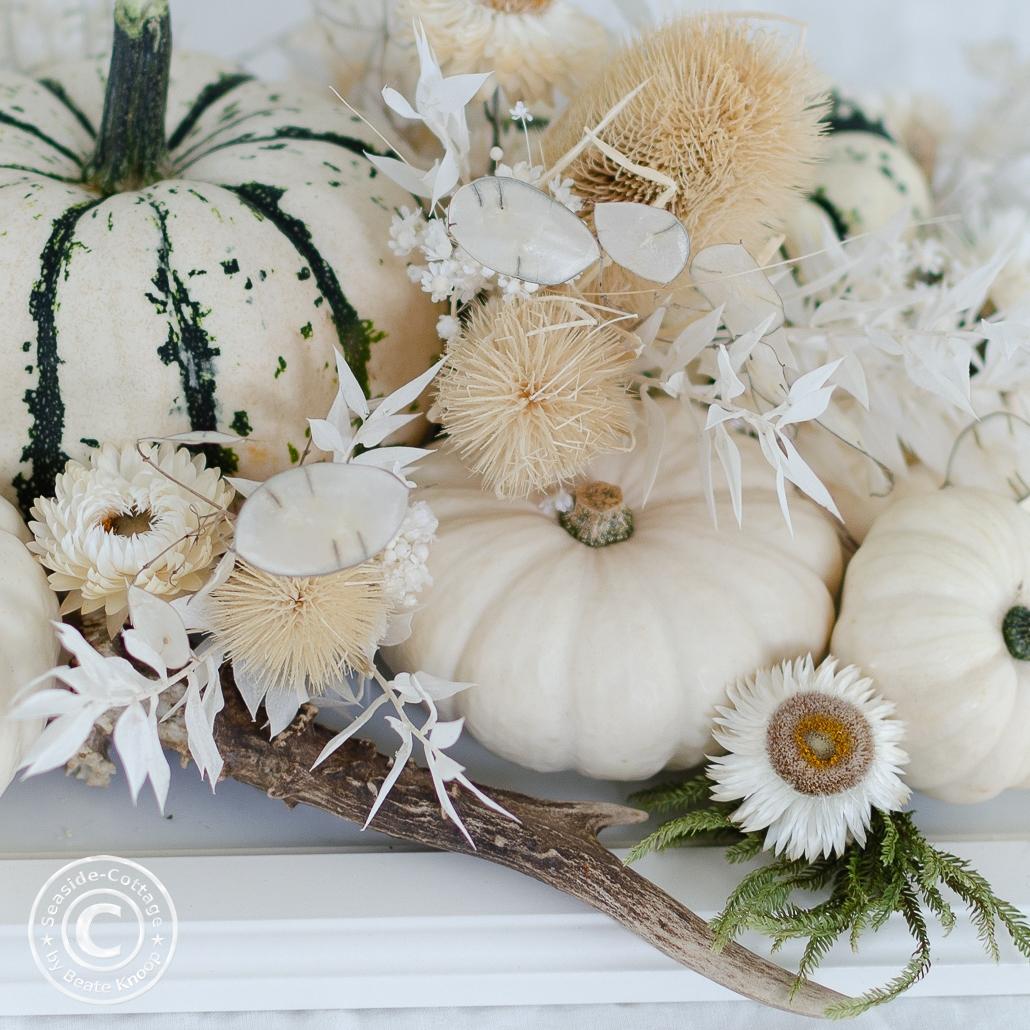 Nahaufnahme Kürbisse in weiß und weiß-grün dekoriert mit getrockneten Karden, getrocknetem gebleichten Ruscus und weißen Strohblumen