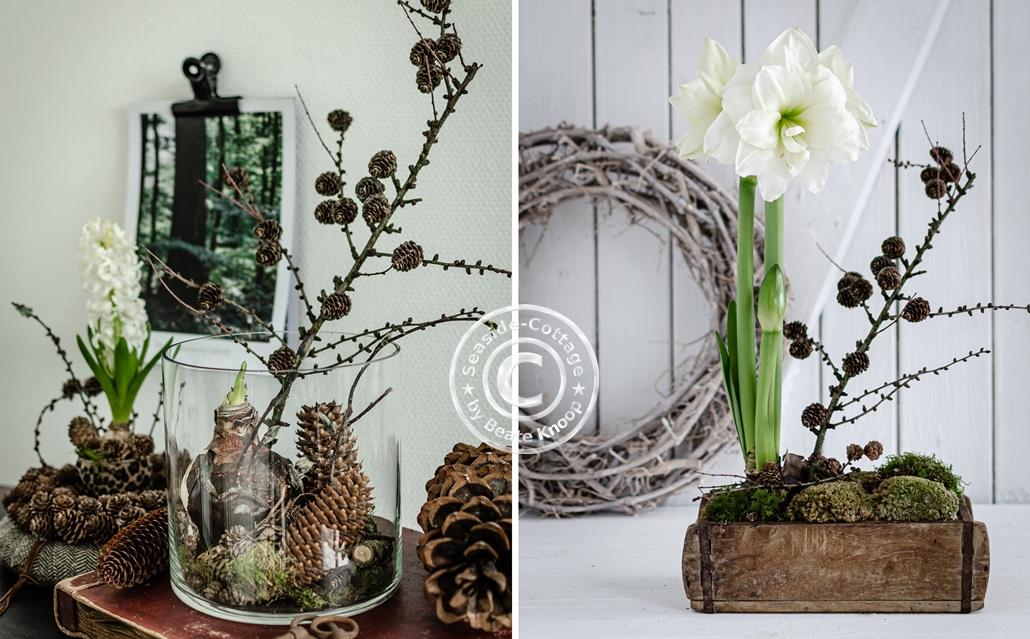 Amaryllis naturnah dekorieren 2 Ideen