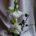 Amaryllis winterlich dekorieren - 7 Tipps für eine natürliche Gestaltung