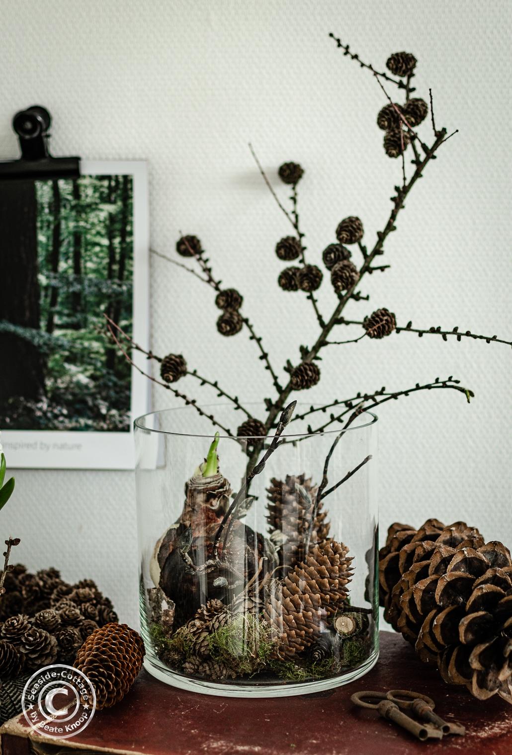 Amaryllis winterlich dekorieren - 2 Ideen