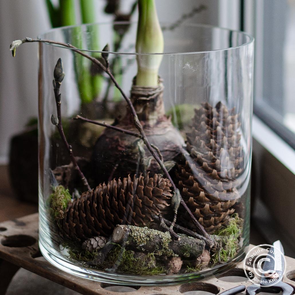 Amaryllis winterlich natürlich dekoriert 2 Ideen